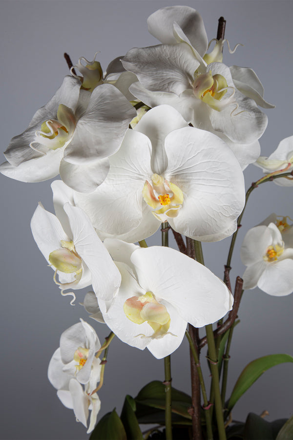 Phalaenopsis - White - 72cm Tall Artificial Orchid with 8 Stems in Glass Pedestal Bowl
