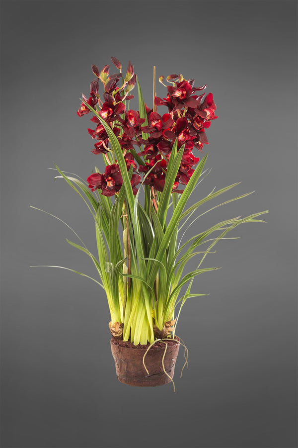 Cymbidium - Burgundy - 1.1m Tall Artificial Orchid in Paper Pot