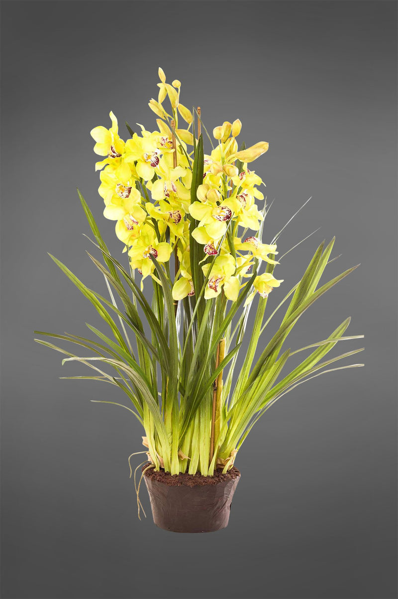 Cymbidium - Light Green - 1.1m Tall Artificial Orchid in Paper Pot