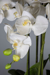 Phalaenopsis - White - 62cm Tall Artificial Orchid with 7 Stems in White Clay Pot