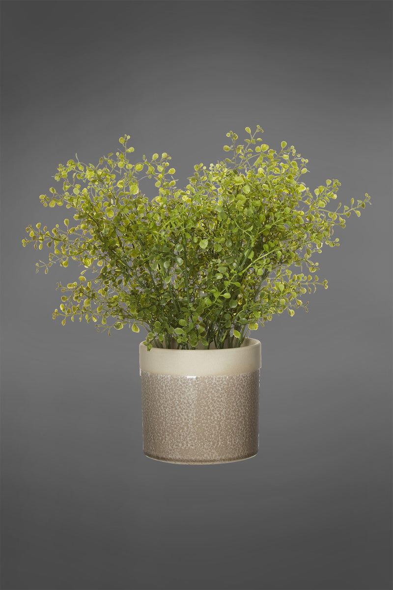 Rice Seed - Green - Artificial Plant in Ceramic Pot