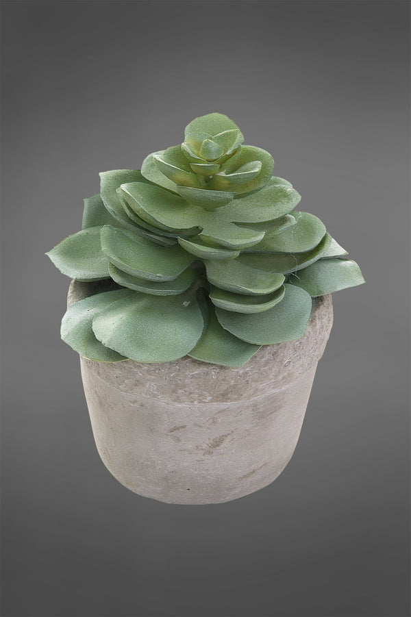Succulent in White Pot Green