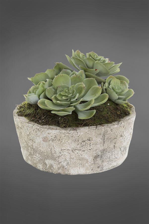 Succulent in Ceramic Pot Green