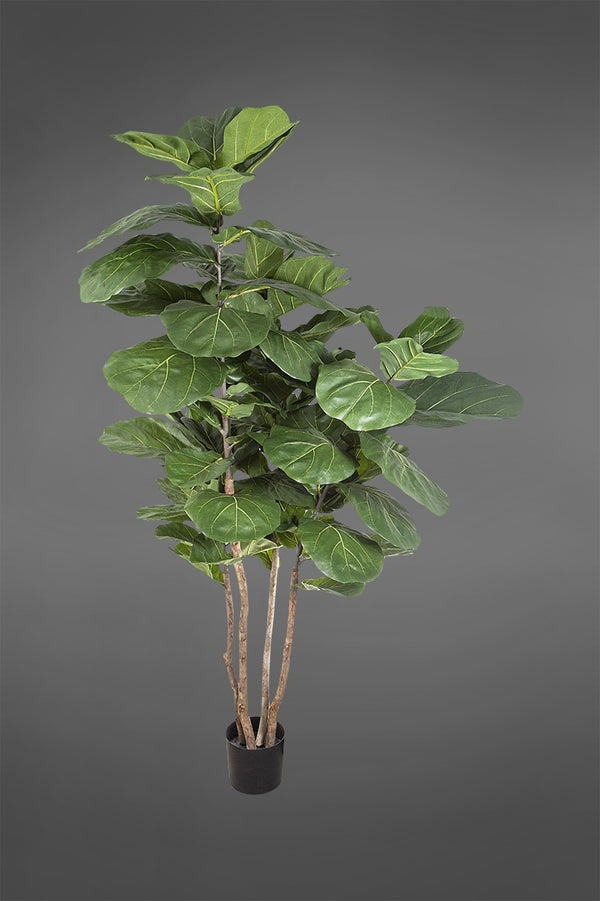 Fiddle Leaf Tree - Green - 1.9m Tall Artificial Tree