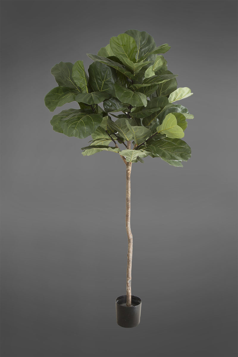 Fiddle Leaf Tree - Green - 1.5m Tall Artificial Tree