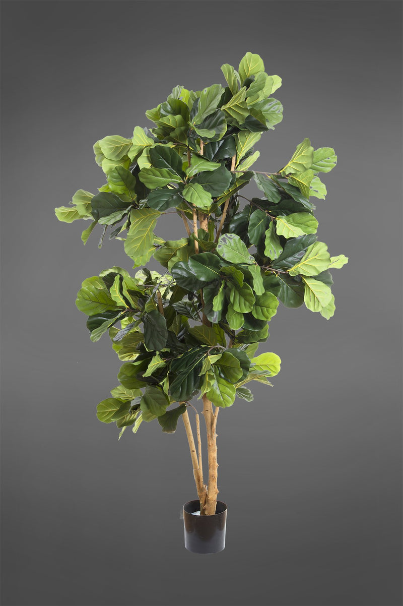 Fiddle Leaf Tree - Green - 2.0m Tall Artificial Tree