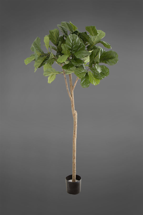 Fiddle Leaf Fig Tree - Green - 1.8m Tall Artificial Tree