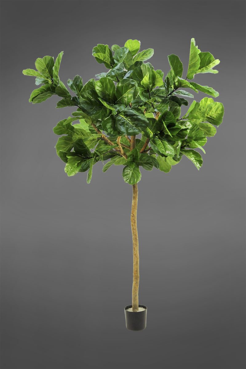 Giant Fiddle Leaf Tree - Green - 3.2m Tall Artificial Tree