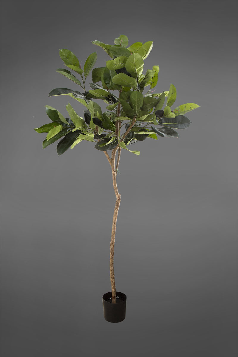 Rubber Plant Tree - Green - 1.8m Tall Artificial Tree