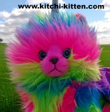 KITCHI - KITTEN  - Rainbow Unicorn Kitten Cuteness
