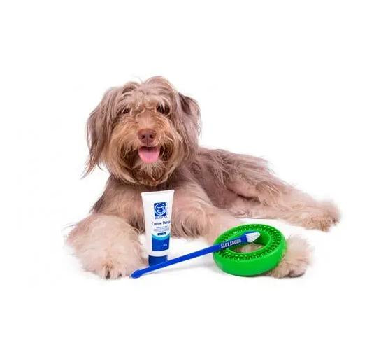 Dental Buddy Kit para pets