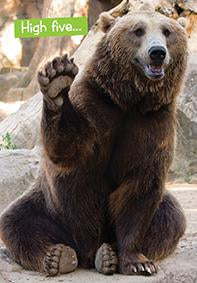 Quirky Critters- Bear high five- General Birthday. Retail $2.99 Unit Quantity 6. Inside: You're still alive. Have a great day.