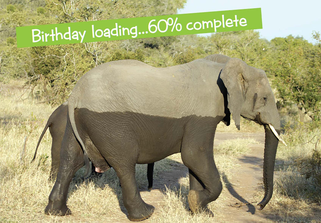 Quirky Critters-Elephant birthday loading- General Birthday. Retail $2.99 Unit Quantity 6. Inside: Happy Birthday.