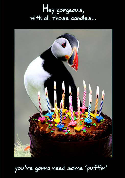 Penguin- Humor Birthday card from the Pigment collection. Unit quantity: 6. Retail: $2.99. Inside: Happy Birthday.