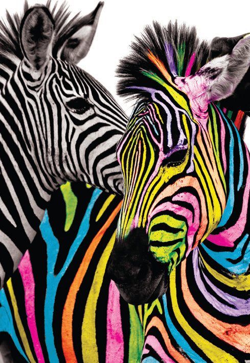 Zebras blank card from the Vivid Jungle collection. Retail $2.99. Unit Quantity 6. Inside: BLANK