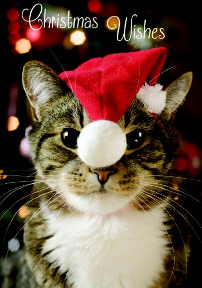 CHRISTMAS CARD-CAT WITH XMAS HAT Retail: $2.99 Unit pack 4 Inside: And a purrfect New Year.