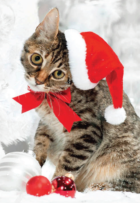 CHRISTMAS CARD 3D - CAT IN XMAS HAT Retail: $3.99 Unit pack 6 Inside: Marry Christmas