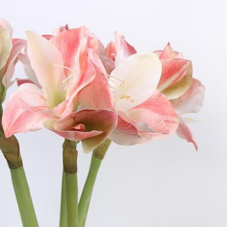 "Clivia Orchid Stem in Pink 30"" Tall"