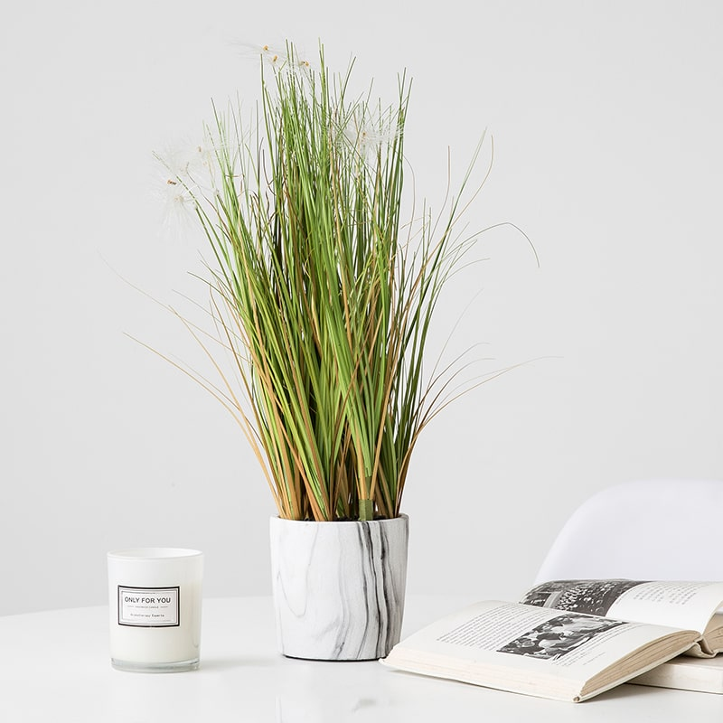 Small Potted Plant Grass in Planter