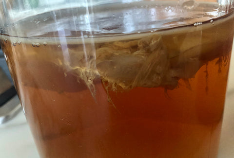 New SCOBY forming on top of liquid. Stringy, floating bits are normal.