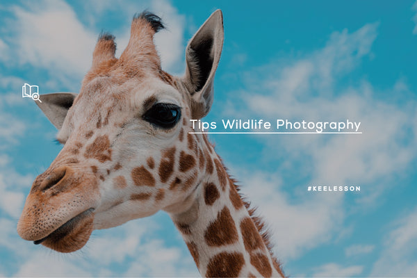 Tips Wildlife Photography