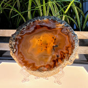 Natural Brazilian Agate Slices w/ acrylic stand (5055-0012)
