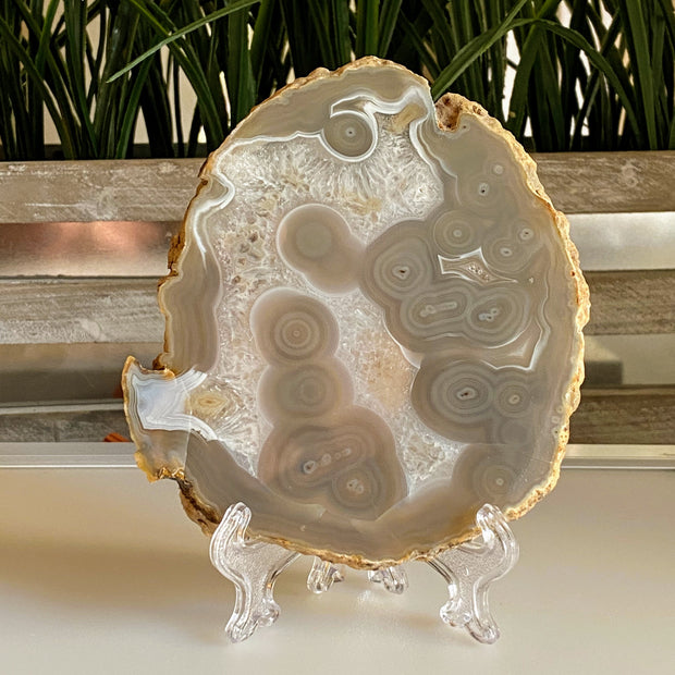 Natural Brazilian Agate Slices w/ acrylic stand (5055-0013)