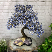 "Large Handmade Gemstone Tree, Sodalite Gems, 25"" tall, 144 branches and 720 gemstones (5407-0001)"