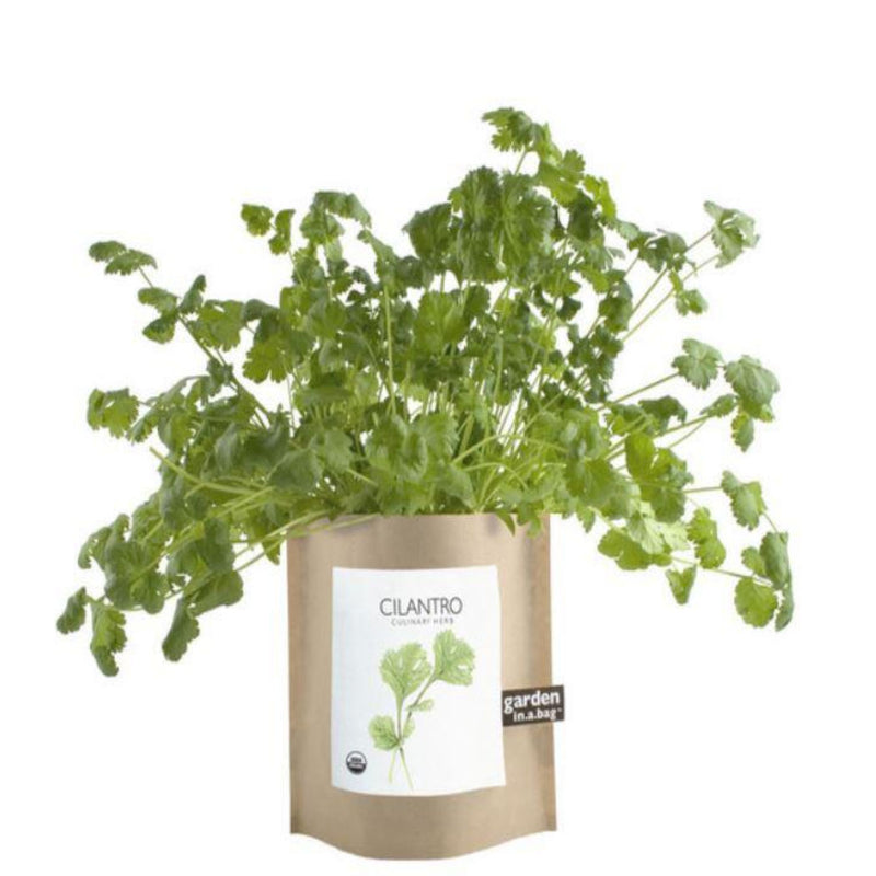 Garden in a bag Cilantro