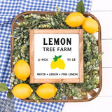 Lemon Tree Handmade Wood Sign