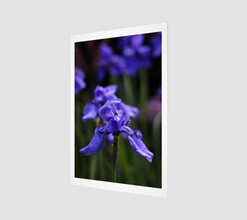 Ideally Iris Fine Art Print