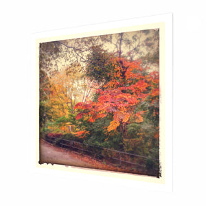 Autumn Colours Fine Art Print