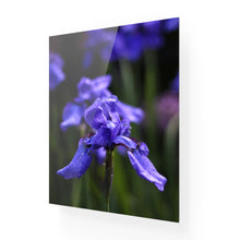 Load image into Gallery viewer, Ideally Iris Acrylic Print