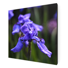 Load image into Gallery viewer, Ideally Iris Canvas Print