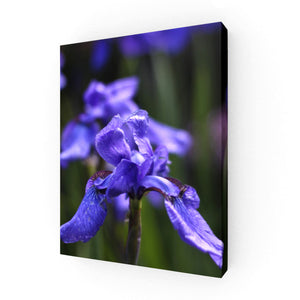 Ideally Iris Canvas Print