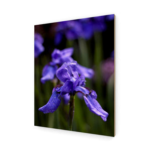 Ideally Iris Wood Print