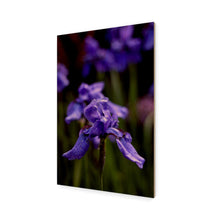 Load image into Gallery viewer, Ideally Iris Wood Print