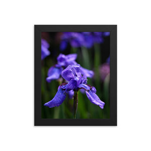 Ideally Iris Framed Print