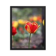 Load image into Gallery viewer, Totally Tulip Framed Print
