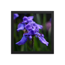 Load image into Gallery viewer, Ideally Iris Framed Print