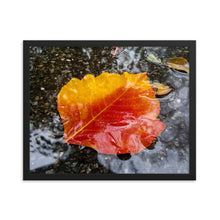 Load image into Gallery viewer, Fallen Leaf Framed Print