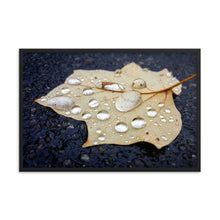 Load image into Gallery viewer, Raindrop Leaf Framed Print