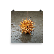 Load image into Gallery viewer, Golden Seed Pod Poster Print