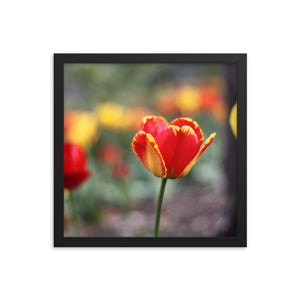 Totally Tulip Framed Print