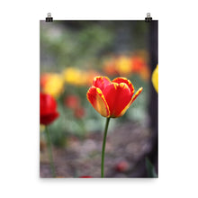 Load image into Gallery viewer, Totally Tulip Poster Print