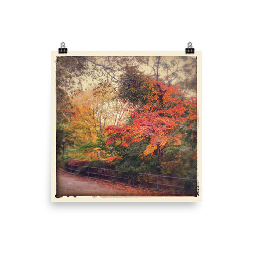 Autumn Colours Poster Print
