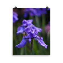 Load image into Gallery viewer, Ideally Iris Poster Print