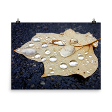 Load image into Gallery viewer, Raindrop Leaf Poster Print