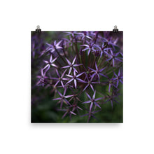 Load image into Gallery viewer, Purple Posey Poster Print