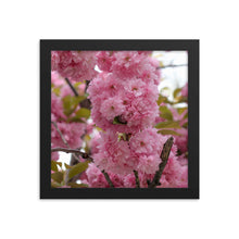 Load image into Gallery viewer, Cherry Blossoms Framed Print